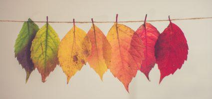 Il compito più difficile nella vita è quello di cambiare sé stessi.